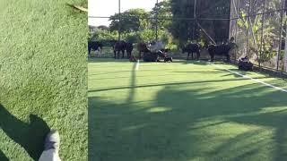 SiteBarra - Campo Society usado para prender gado em Barra de São Francisco