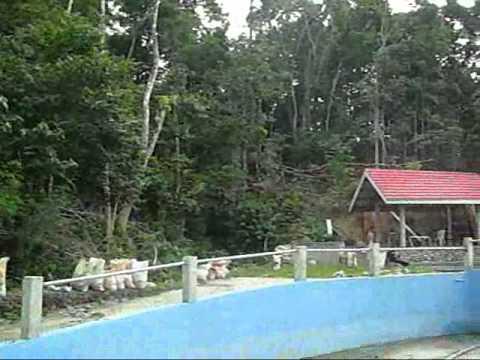 Malinao dam pilar bohol doovi for Jardin necitas
