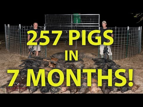 Russell County, AL Project 257 Pigs Captured In 7 MONTHS!