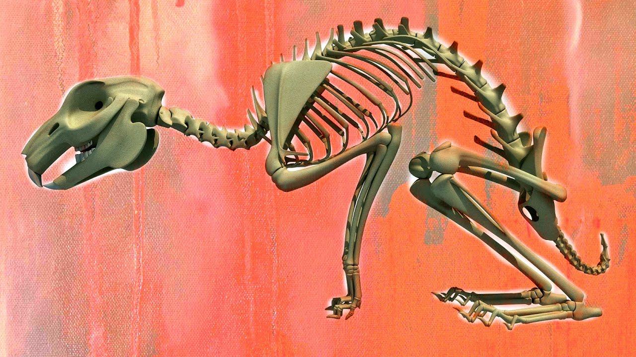 Rabbit Skeleton 3d Model Youtube