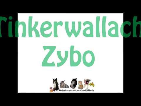 Tinkerwallach Zybo - Tierheilkundezentrum Nehls