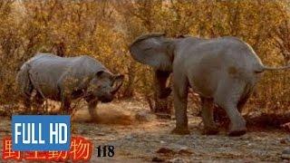 【動物 戦い 】野生動物-野生動物 戦い-ゾウ対サイ 2016++ Playlist : ...