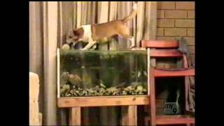 Video Dog park collection (Americas Funniest Home Videos / AFV) download MP3, 3GP, MP4, WEBM, AVI, FLV Agustus 2018