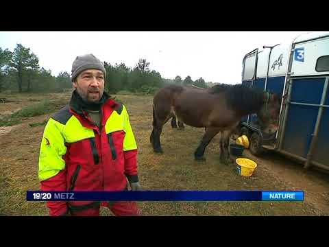 Foret Cheval