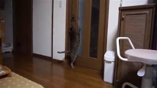 ドア thumbnail