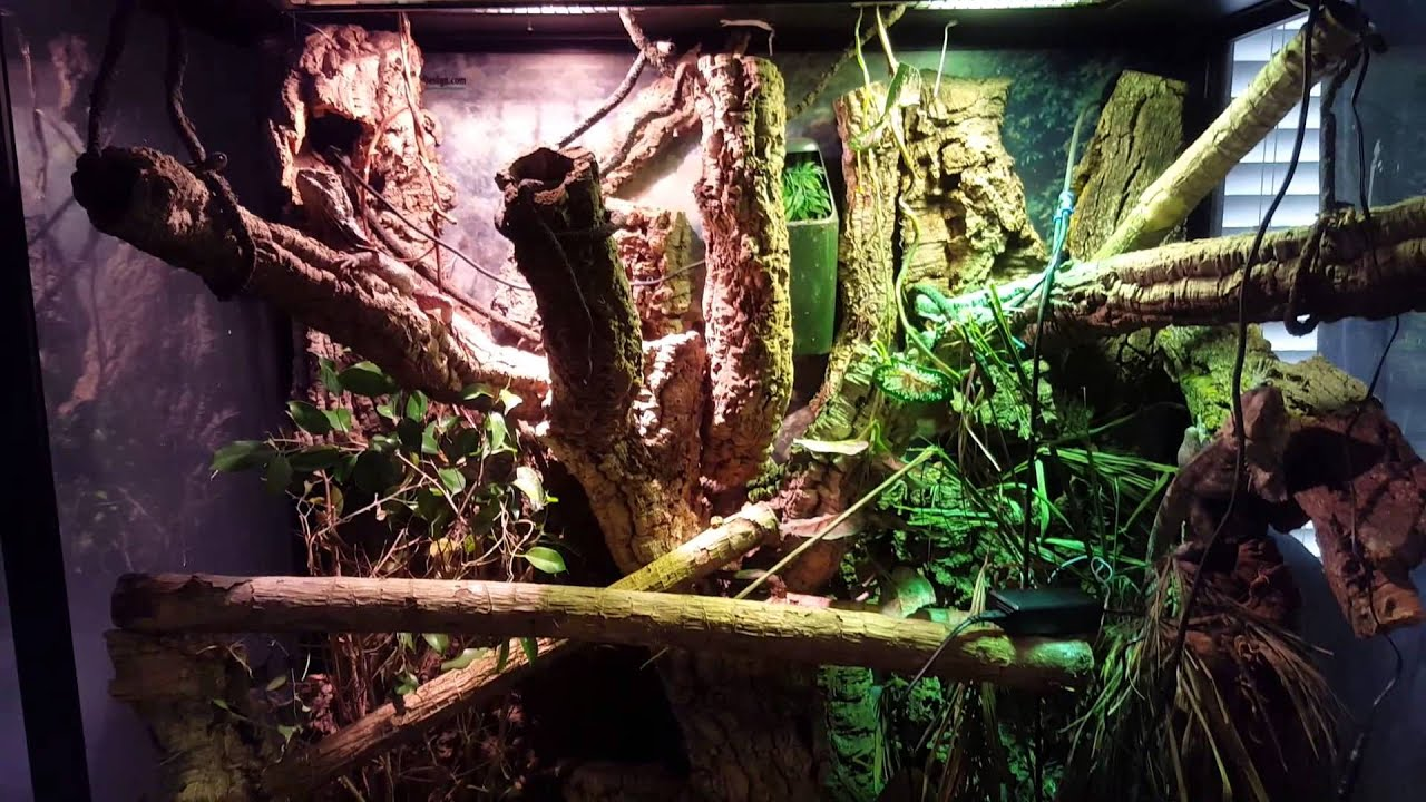 New Zoomed Led Uvb 36 Inch For Frilled Dragons Youtube