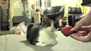 Deze kat houdt absoluut niet van aardbeien