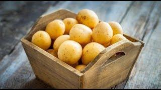 4 РЕЦЕПТОВ из картофеля, которые вам точно захочется ПОВТОРИТЬ!