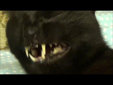 Weird Cat lol