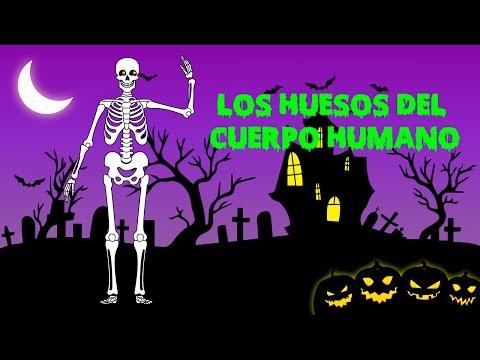 Huesos del cuerpo humano en español | Vídeos educativos