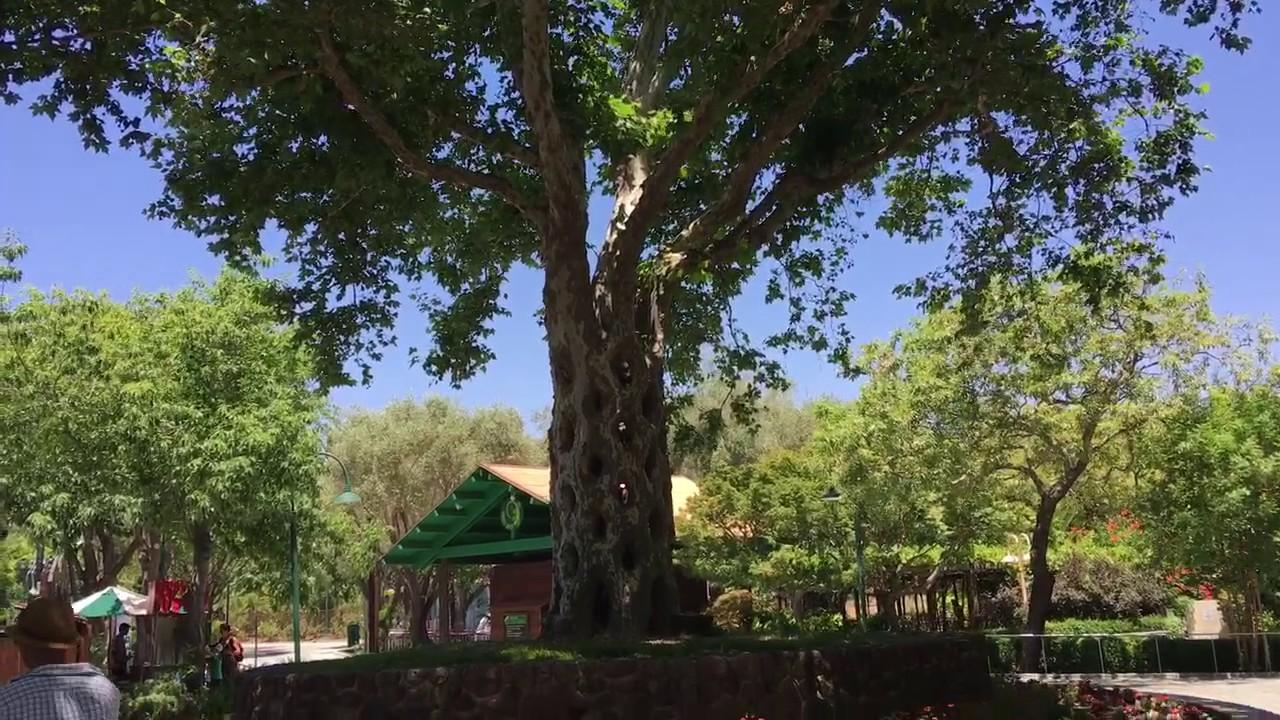 Basket tree gilroy gardens family theme park circus for Gilroy garden trees