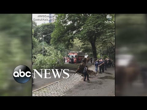 4 injured after huge tree falls in NYC's Central Park