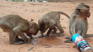 What Brutus leader monkey doing on female monkey? Why Popeye cry Oh Good? Female monkey cry Oh Wow!