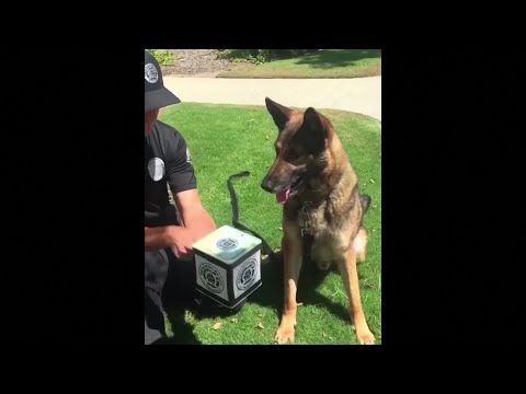 Police Dog Vs. Jack-In-The-Box Puppet: Dog Wins!