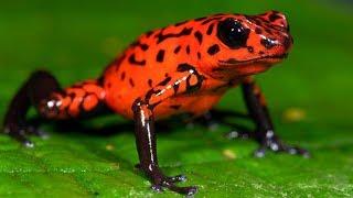 地球上で最も有毒な10の生物