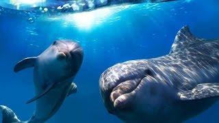 Алматинский дельфинарий