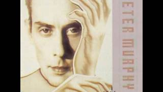 Watch Peter Murphy His Circle And Hers Meet video