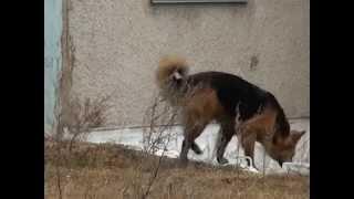 16 04 15 Куда пожаловаться на бездомных собак