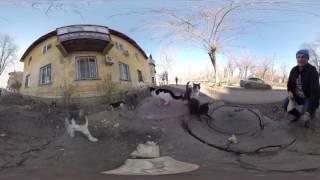 Видео 360 котята