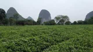 Guilin Tea Research Institute Tea Plantation in Guilin, China
