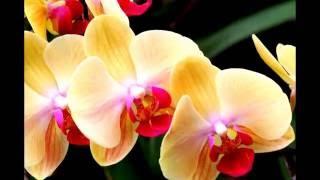Как раскрывается бутон орхидеи! Красивое видео о цветах!(Очень красивое видео о любимых цветах с музыкальным сопровождением. Пересаживаю орхидею в стеклянную..., 2016-05-24T06:18:42.000Z)