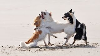 How To Deal With An Aggressive Puppy | Puppy Care