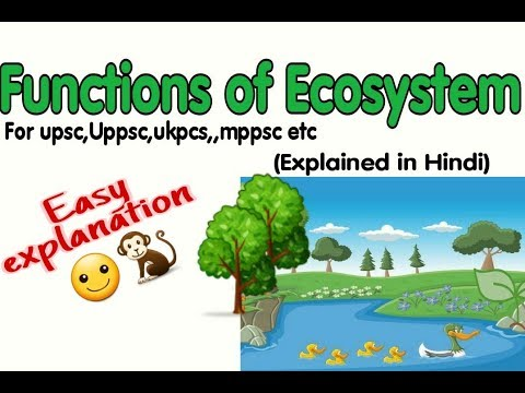 Functions Of Ecosystem || Environment Lect-6 || Bollywood Style