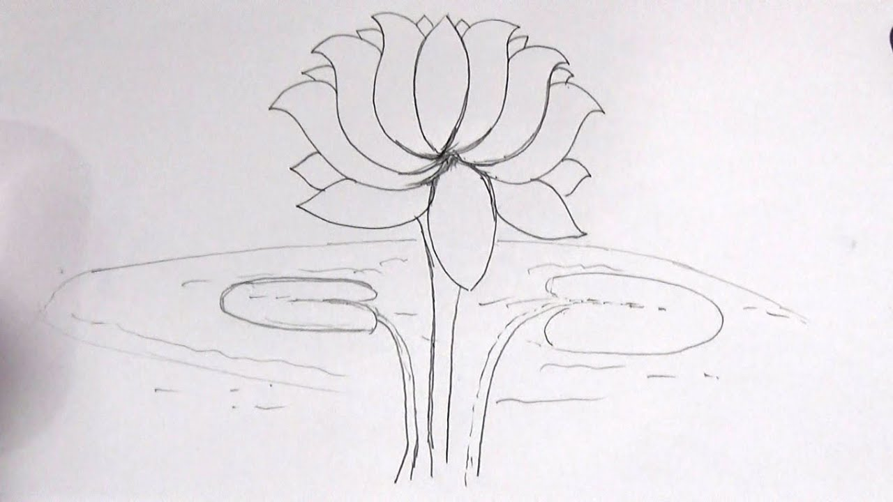 How to Draw a Lotus Flower Step by Step and super Easy sketch