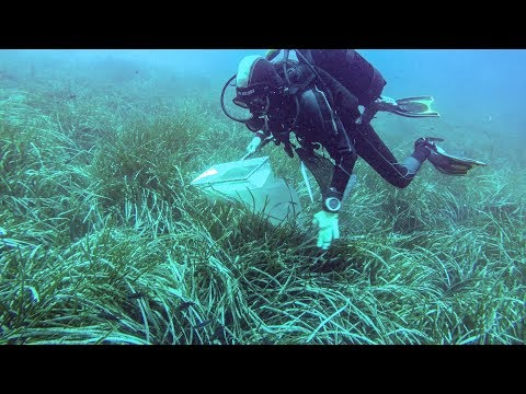 Underwater Biological Research Scuba Diving on the Poseidon Shoal, Liguria, Italy