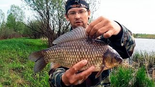 ДА ЛАДНО?! ВОТ ЭТО КАРАСИ!!! Супер рыбалка! Такого активного клева я не ожидал