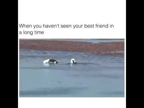 When you haven't seen your best friend in a long time