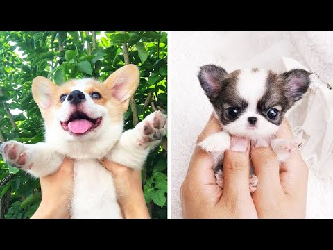 Cute baby animals Videos Compilation cutest moment of the animals - Cutest Puppies #5