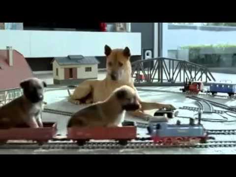 강아지광고