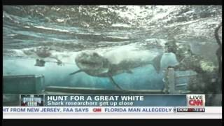 Hunt for a Great White Shark, researchers get up close (August 9, 2013)