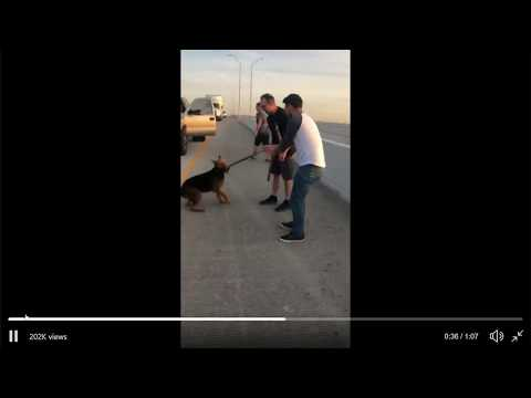 The Pauly and Pat Show - GOOD STUFF: 20 People Stopped Traffic to Rescue a Dog on the Highway