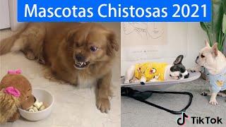 Entretenimiento mascotas 2021 Tik tok animales chistosos y divertidos EP: 4 ❤❤