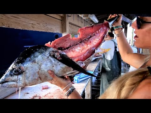 How to Fillet a Yellowfin Tuna & see what I found in the belly!