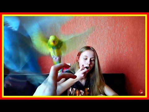 Vlog: Самый голодный и доставучий попугай в МИРЕ #Волнистыйпопугайчик