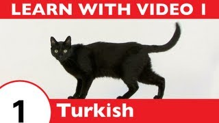 Learn Turkish with Video - Learning Turkish Vocabulary for Common Animals Is a Walk in the Park!