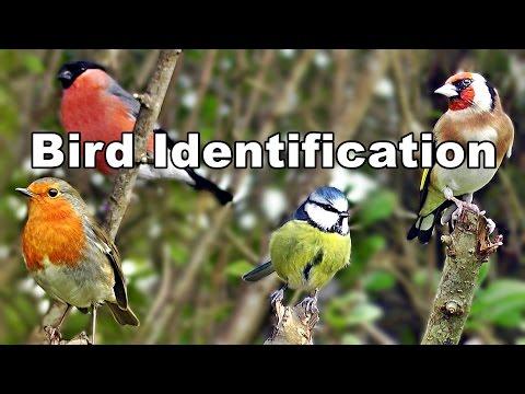 Identify Birds - Garden Bird Identification