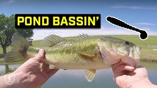This Bait Catches A TON Of Pond Bass!