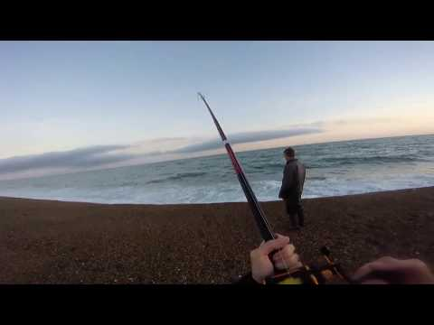 Chesil Beach Fishing May, June And July 2017