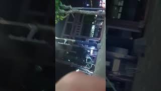 [캣튜버 연희동] 뉴페…