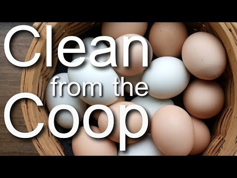 Chicken Coop Tip! CLEAN Eggs Straight From Your Nesting Box!