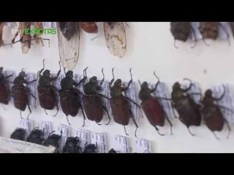 Proyecto de Biodiversidad de Insectos en Misiones
