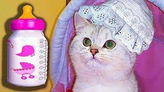 Приколы с детьми и котами Смешные дети и кошки 2017 Приколы с кошками и котами Котенок Симка