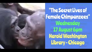 The Secret Lives of Female Chimpanzees - Dr. Melissa E. Thompson