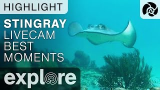 Stingray Collection - 10 Unique Sightings - Cayman Reef Live Cam Highlight