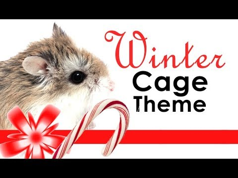 Winter Hamster Cage Theme Hamster Cage Tour Youtube