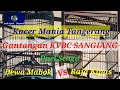 Duel Sengit Kacer Raja Kipas Vs Kacer Dewa Mabok Kacermania Cpitv Dede Syah Channel  Mp3 - Mp4 Download